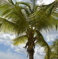 Vols Tropical 2020